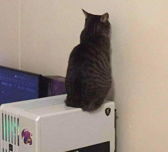 Se sienta sobre el ordenador y mira a la pared