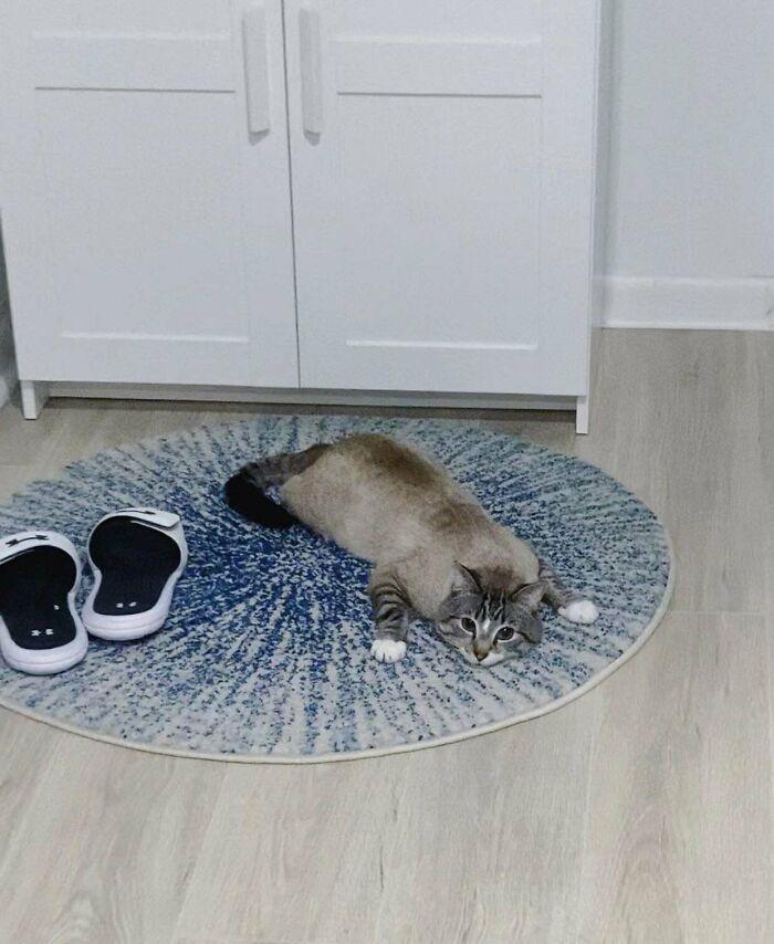 Creo que realmente le gusta la alfombra nueva