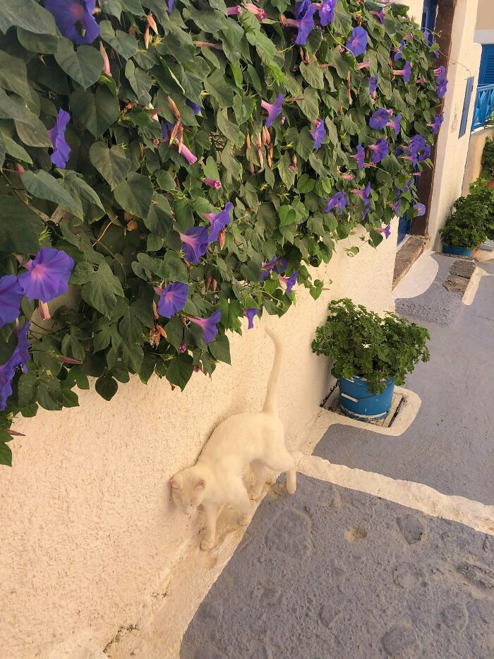 My Friend Found An Invisible Cat In Greece