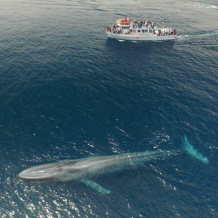 Jesus Christ This Blue Whale