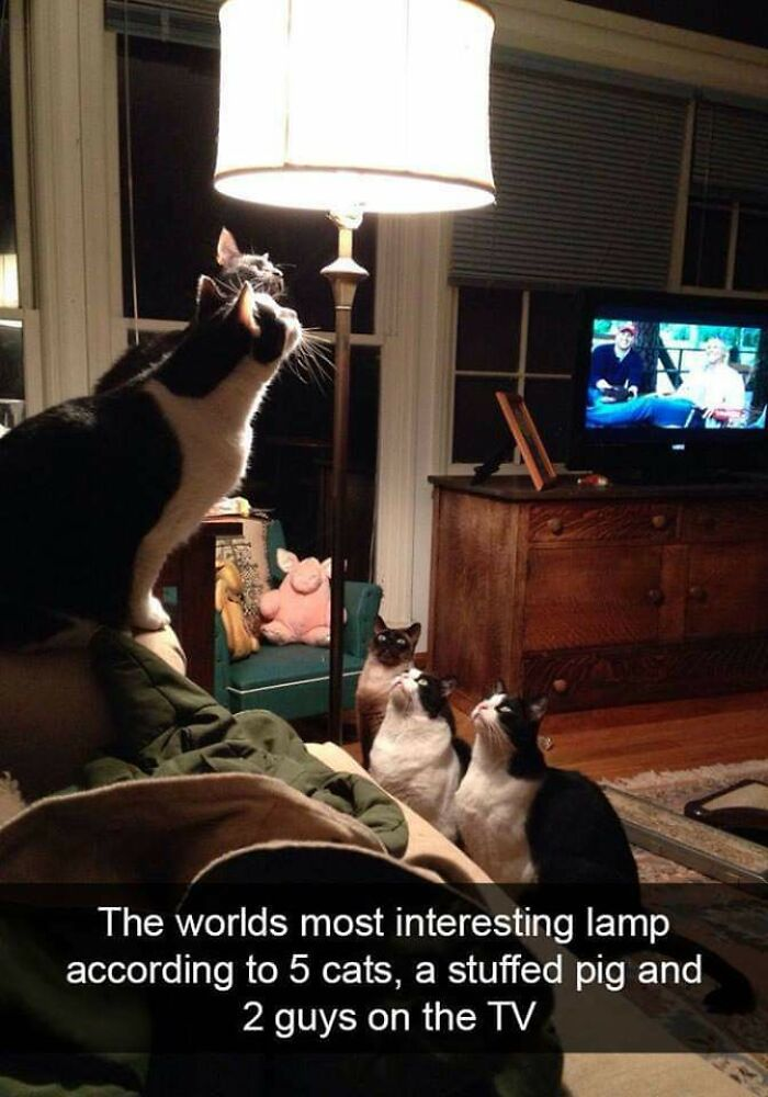 The World's Most Interesting Lamp