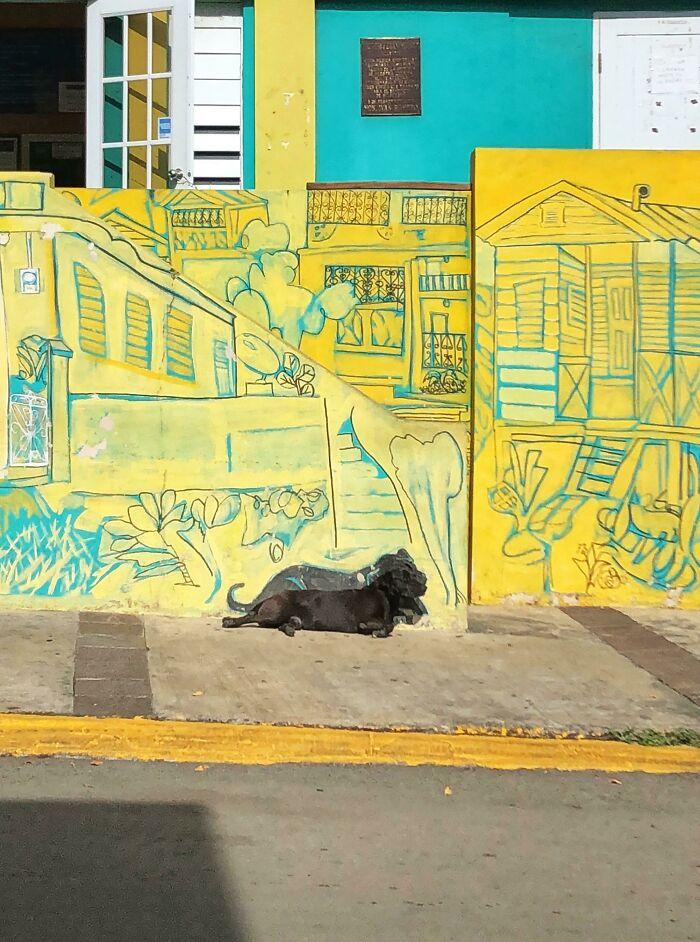Locals In Puerto Rico Painted This Mural. They Made Sure To Include The Dog That Chills There Often.