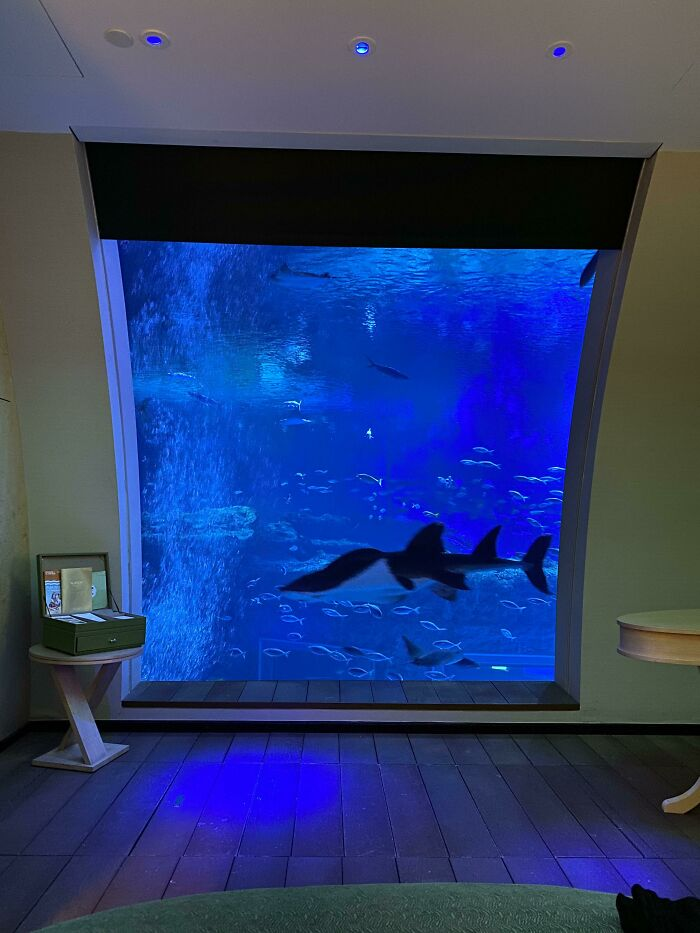 Out Hotel Room Is Inside A Giant Aquarium With Sharks, Mantas And Stingrays Swimming About