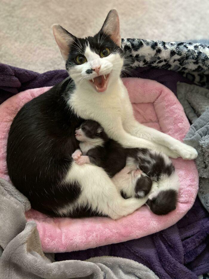 Me está hablando de sus bebés