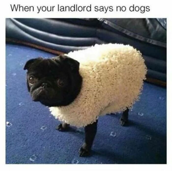 """When Your Landlord Says """"No Dogs!"""""""