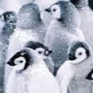 Gegy Penguin
