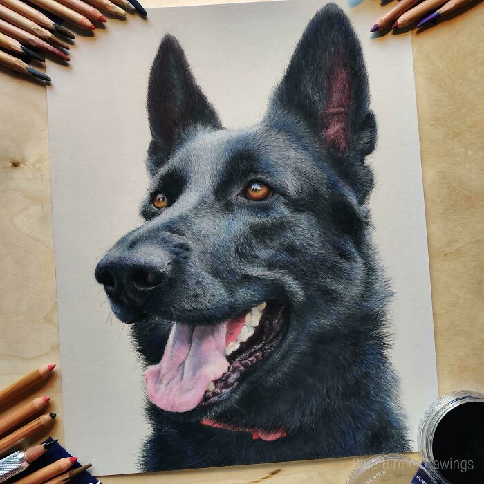 I Made A Portrait Of German Shepherd With Soft Pastels And Pastel Pencils. What Do You Think?