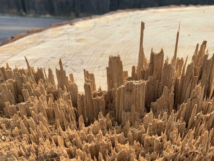 Wood Splinters That Look Like A City