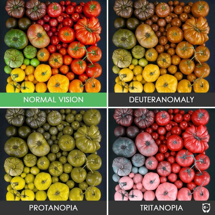 Different Forms Of Color Blindness