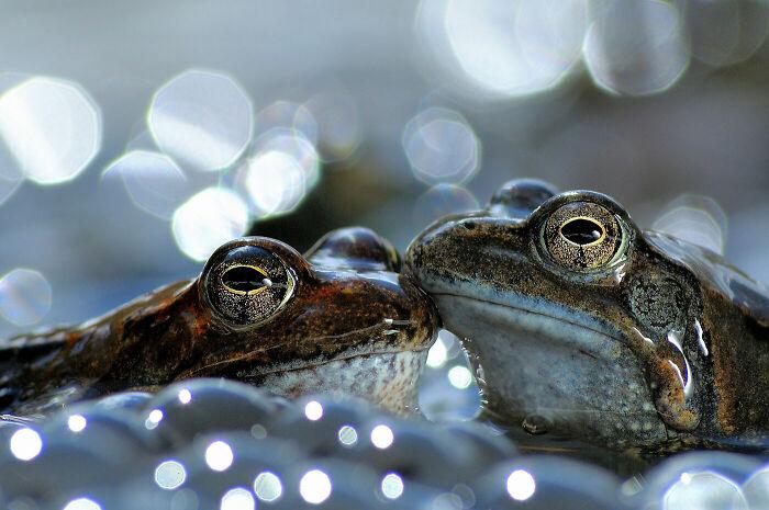 Behaviour - Amphibians And Reptiles, Gold: Vittorio Ricci, Italy