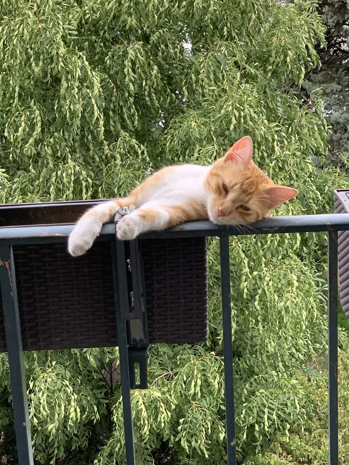 This Ledge Looks Comfortable, I Will Nap Here