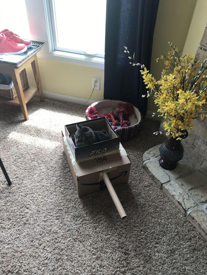 Cat In Homemade Tank