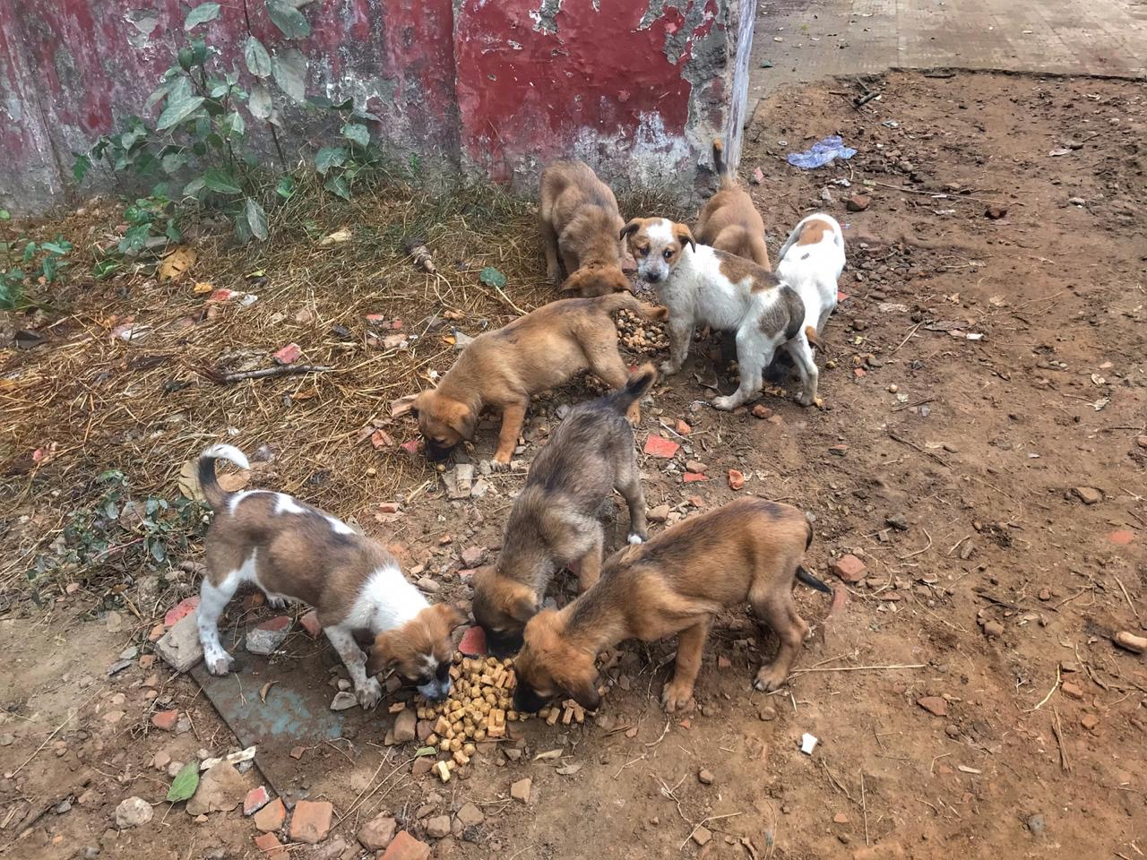 Fundraiser For Treatment For 4 Sweet Pups