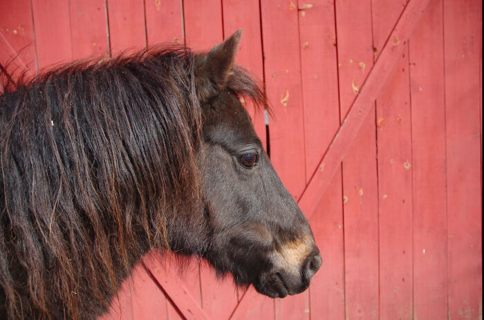 One Of My Best Pictures. This Is My Pony Frodo(Baggins)