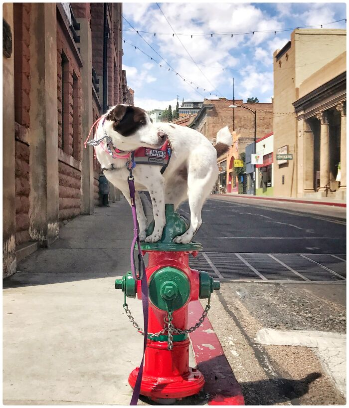 My Dog On This Fire Hydrant In Bisbee, Arizona