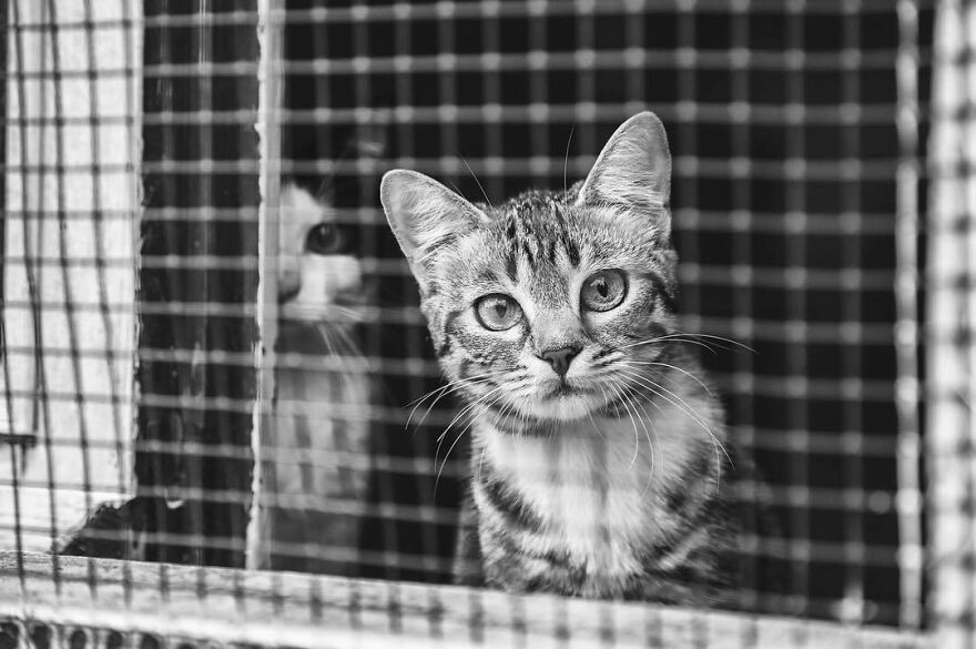 In A Shelter, Waiting For Adoption