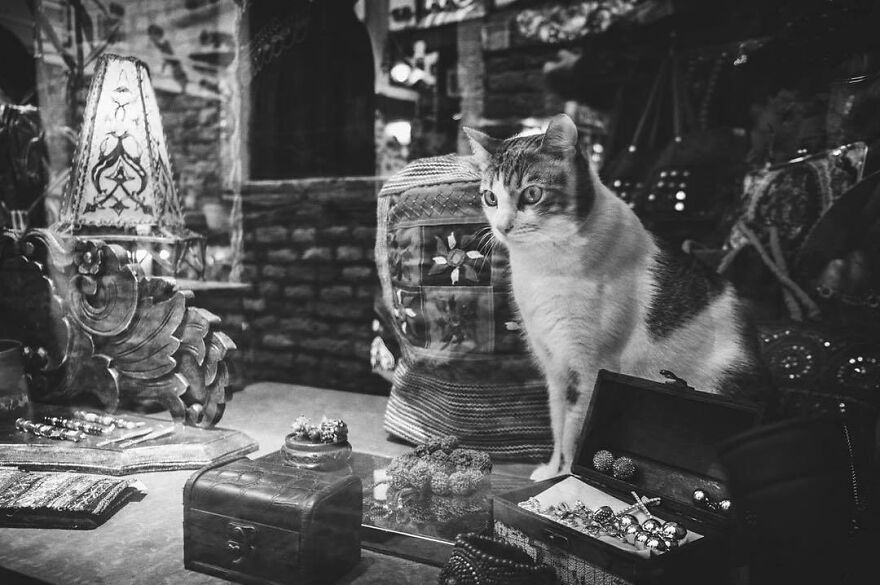 Cats With Careers: At The Jewelry...