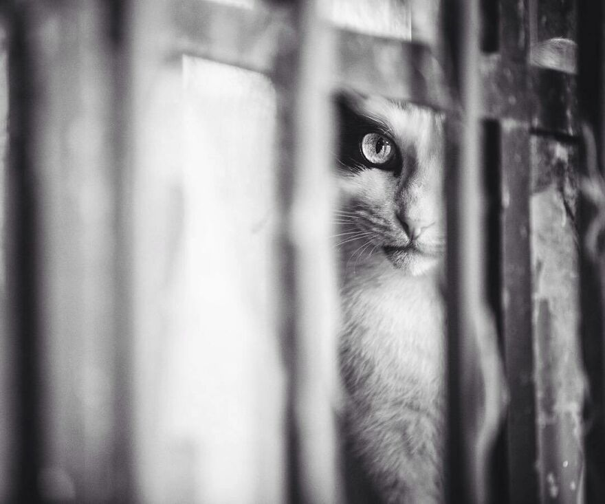 Feeling Observed