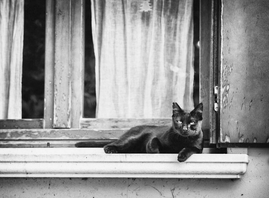 There Must Be Something About Cats And Windows That Makes Every Shot Look Perfect