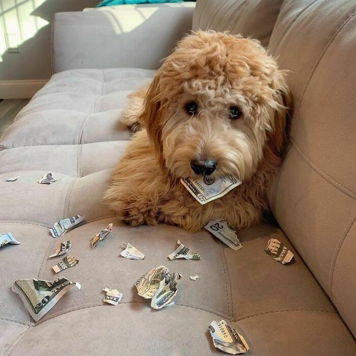 All I Wanted To Do Was Make A Depawsit To Buy More Treatos. Not Sure Why My Puppy Eyes Didn't Work In Dis Situation