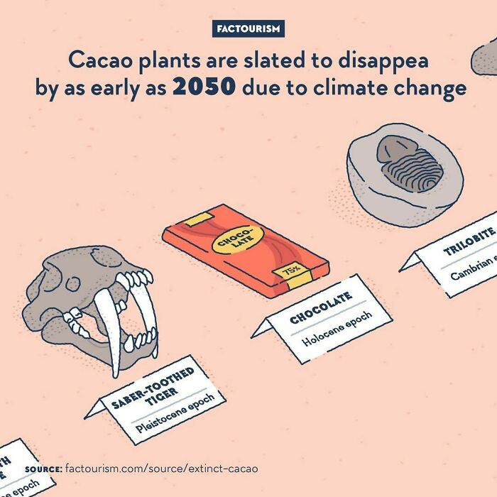 Cacao Plants Are Slated To Disappear By As Early As 2050 Due To Climate Change  cacao Plants Are Cultivated In A Very Narrow Strip On The Globe: They Grow Only Around The Equator, In Places That Have Relatively Stable Temperature And Humidity During The Year. But In The Next Few Decades, The Climate Of These Regions Is Expected To Become Warmer And Dryer, Leaving The Cacao Nowhere To Be Grown. Giant Chocolate Companies Like Mars Are Working With Scientists To Find Solutions, Like Making Gmo Cacao Plants Able To Withstand These Conditions, But We Are Certainly Reaching The End Of Chocolate As We Know It.