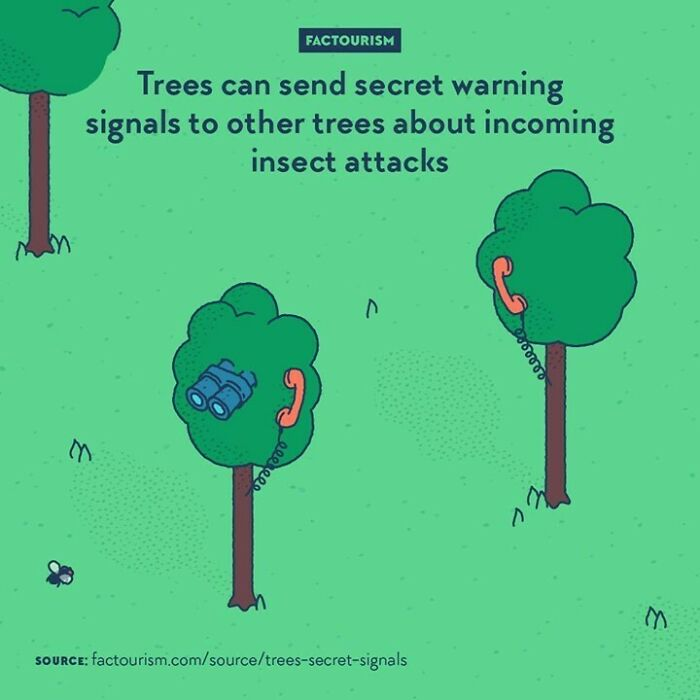  trees Can Send Secret Warning Signals To Other Trees About Incoming Insect Attacks  {weekend Repost} plants Can Communicate With One Another. Some Correspond With Each Other By Emitting Volatile Organic Chemicals, Some Even Send Electric Signals. The Meaning Of The Messages Can Have Different Goals, Such As Alerting About Insects, Advising Nice Directions For Growing, Regulating Temperature, Etc.