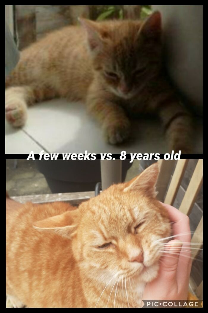 Joris Is Now Around Three Times Larger Then He Was As A Kitten!