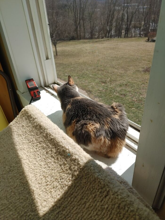 Cricket Finds A Spring Breeze - Even Though She Is Blind Cricket Knows Where To Find A Spring Breeze When A Window Is Finally Opened.