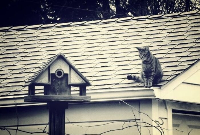 Nerd, Figuring His Way Into Our Birdhouse.