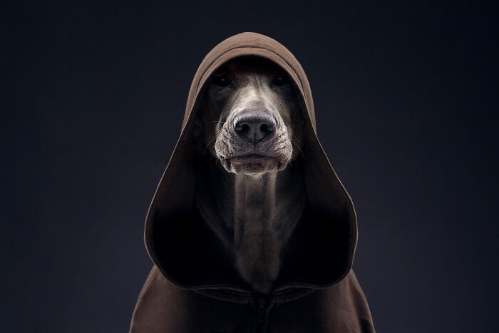 We Proved That Every Dog Has Its Own Human-Like Personality Through Funny Portraits (41 New Pics)