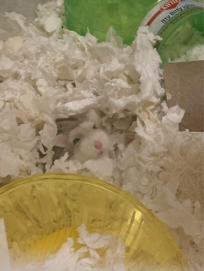 Reina The Hamster