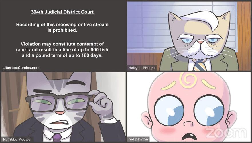 Zoom Cat Lawyer