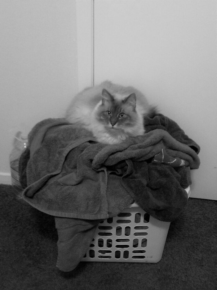 Marlowe, Protector Of Laundry