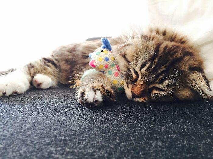 Elmo Taking A Nap