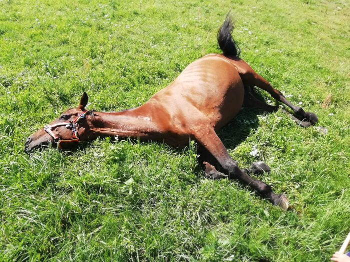 Sunbathing After Work. It Is So Difficult To Be A Kid's Pony, When You Are A Racehorse.