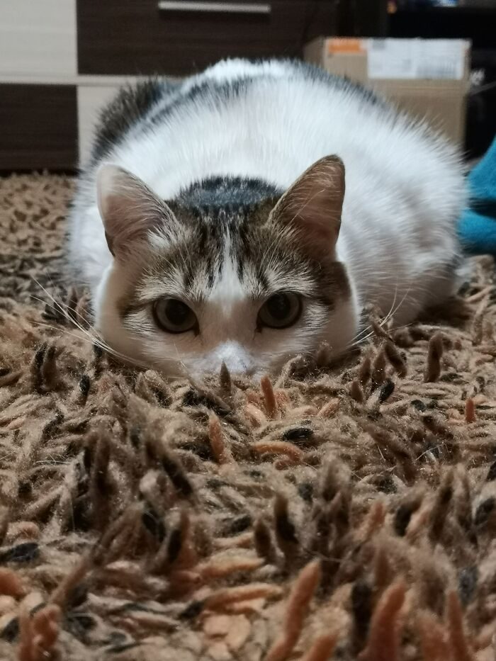 I Am One With The Carpet. You Do Not See Me