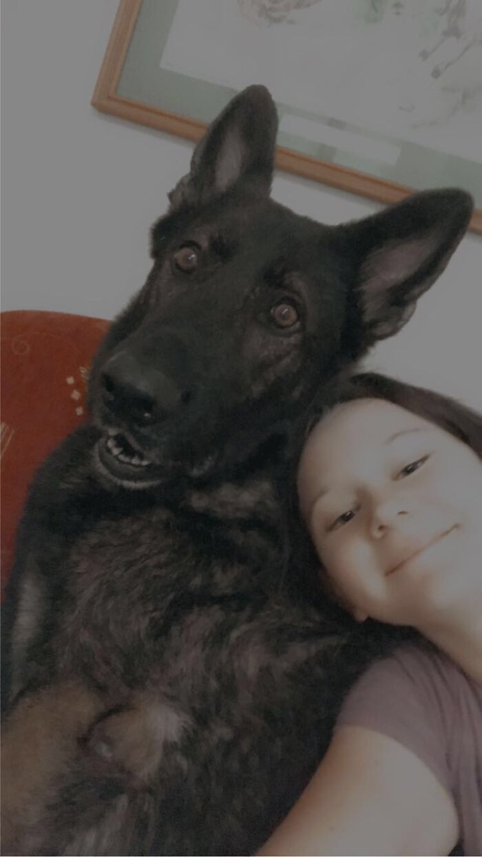 He Was Trained To Be A Police Dog But He Was Fired Because He Didn't Want To Hurt Anyone.