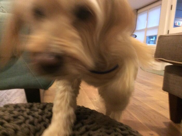 Me: Takes Out Camera. My Dog: Eat It.