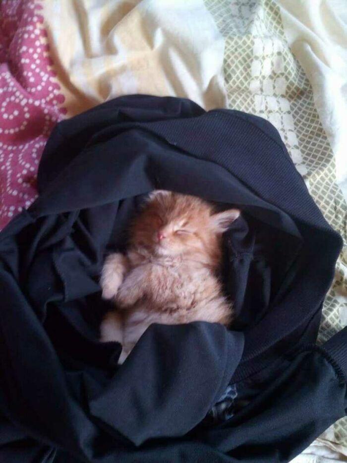 My Cat Ginger