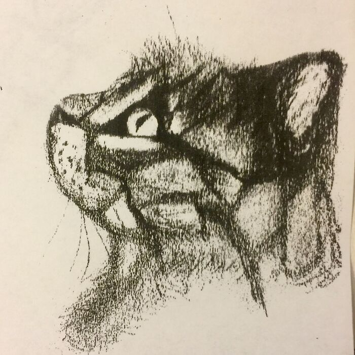 Abstract Sketch Of A Kitty I Drew