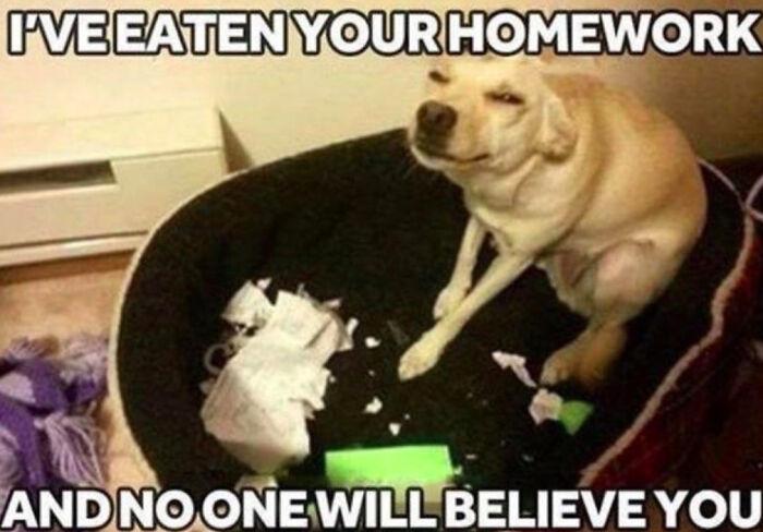 I've Eaten You're Homework