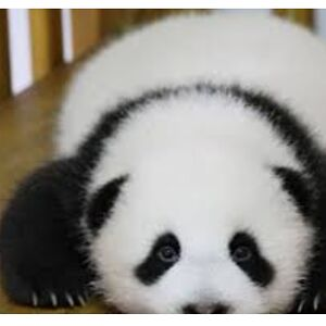 pandas are mine and ross lynch