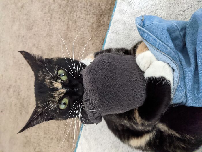 Every Sock Belongs To Pennywise. Every Morning, I Put Them On And She Tries To Take Them Back