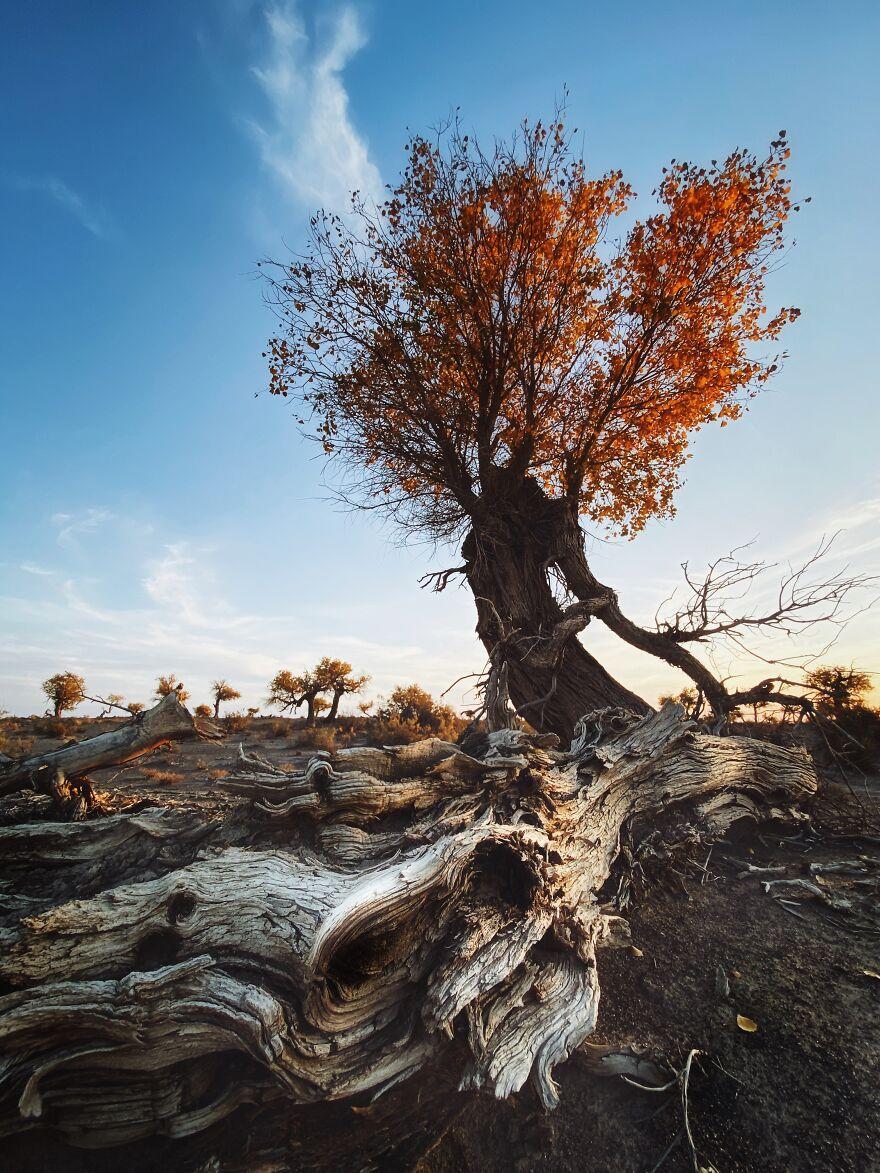 Photographer Of The Year Winner: Early Evening Poplar By Dan Liu
