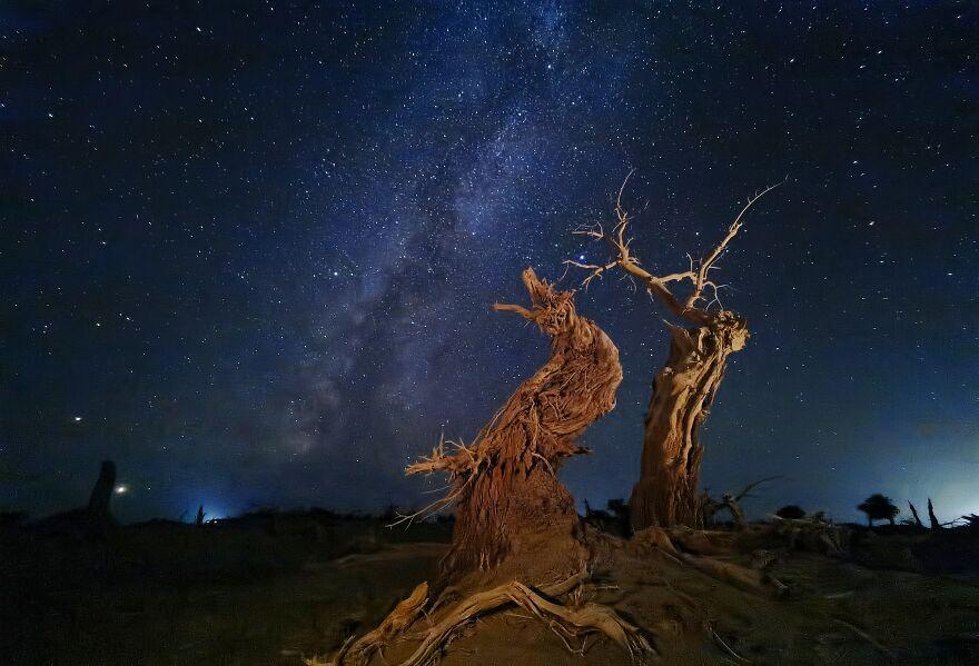 Photographer Of The Year Winner: Poplar Under The Sky By Dan Liu