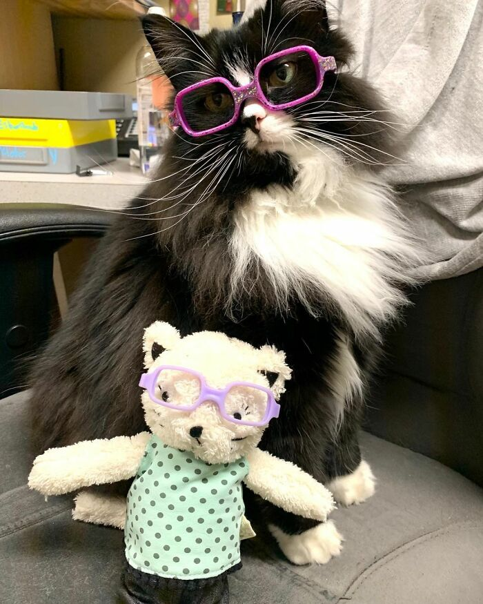 Truffles The Cat Helps Kids Feel Comfortable With Fearing Glasses When They Go To Optometrist