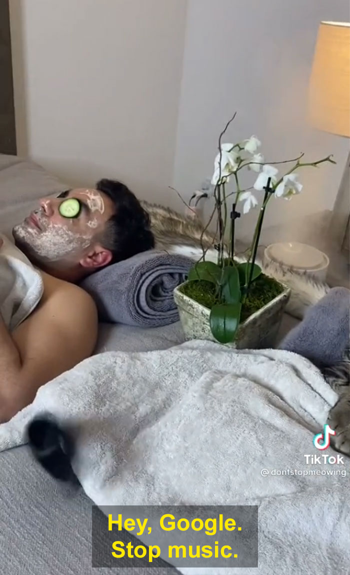 TikTok Of A Cat Having A Spa Day With Owner Goes Viral And Is Watched Over 60 Million Times