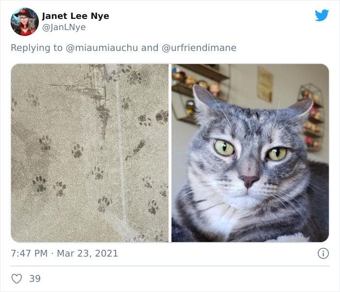 Crime-Criminal-Pets-Crimescene