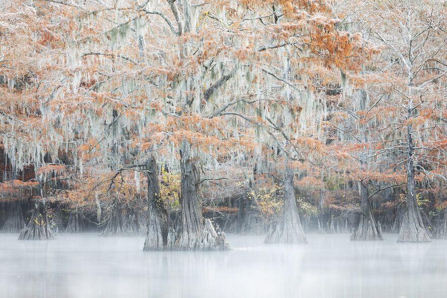 Swamps' Colors