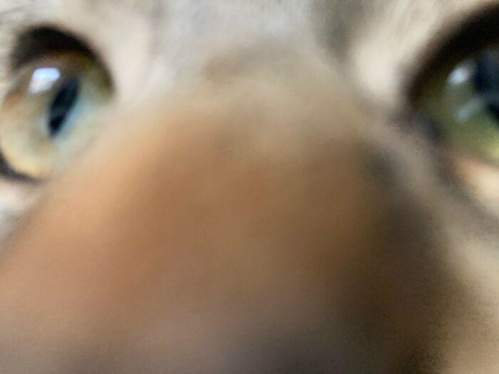 Cat Selfie...